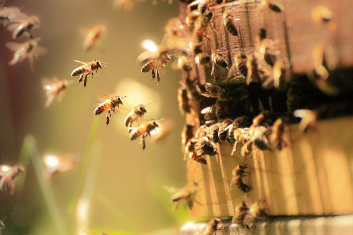 rucher d'ailleurs préservation milieux naturels sensibles développement durable
