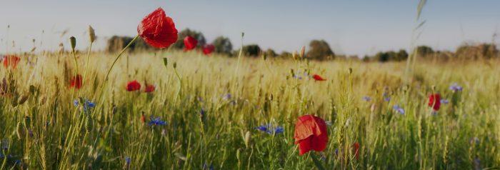 environnement RSE agriculture durable